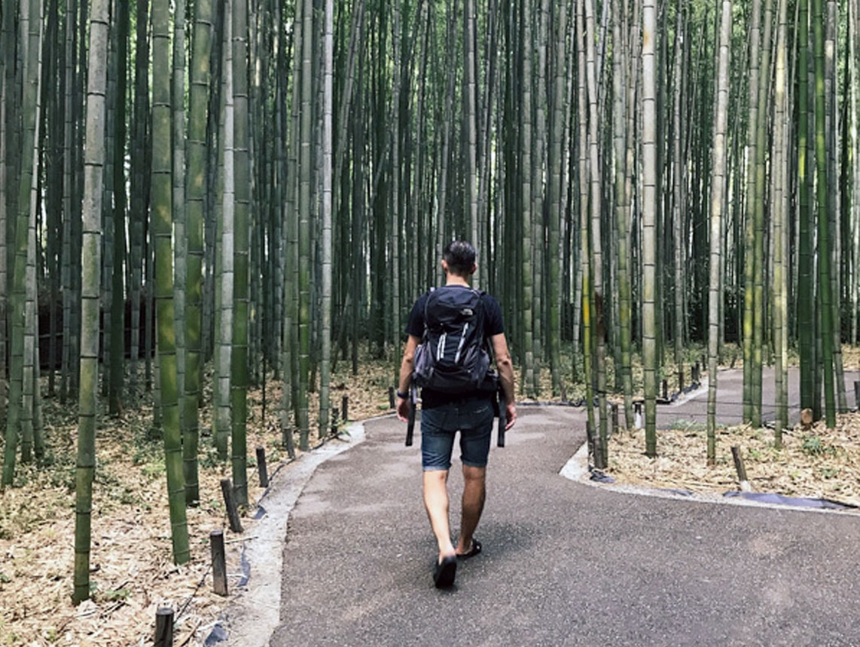 Japonia Arashiyama zielona strona Kioto