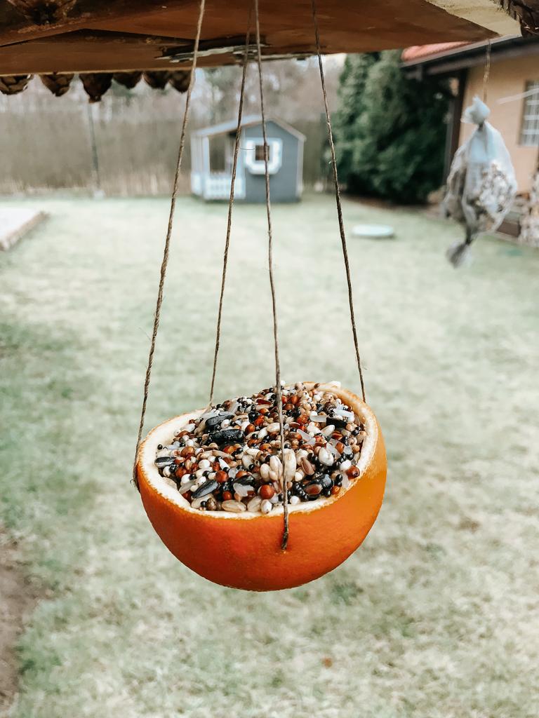 Jedzenie dla ptaków